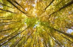 Guld- Oktober med härliga kulöra bokträdträd royaltyfri bild