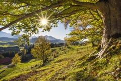 Guld- oktober med härliga kulöra bokträdträd i Bayern royaltyfria bilder