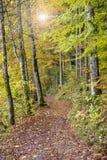 Guld- oktober med härliga kulöra bokträdträd i Bayern arkivbild