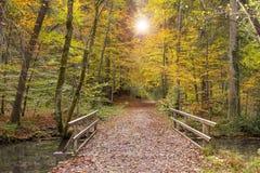 Guld- oktober med härliga kulöra bokträdträd i Bayern arkivbilder