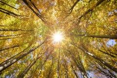 Guld- oktober med härliga kulöra bokträdträd i Bayern arkivfoton
