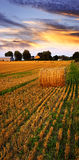 guld- over solnedgång för lantgårdfält Arkivbild