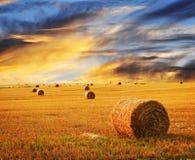 guld- over solnedgång för lantgårdfält Arkivfoto