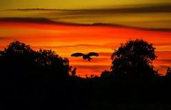 guld- owl Royaltyfria Foton