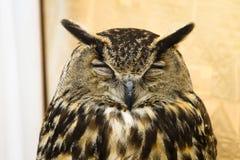 guld- owlstående Royaltyfria Bilder