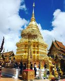 Guld- pagod royaltyfri bild