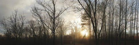 Guld- panorama- timmeladugård Arkivbilder