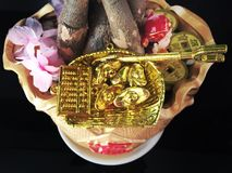 Guld- pengarträd Royaltyfria Foton