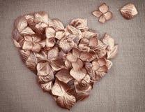 Guld- petals för tappningvanlig hortensiablomma i forma av en hjärta Fotografering för Bildbyråer
