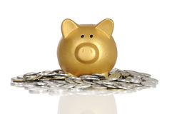 Guld- Piggybank med mynt Arkivfoto