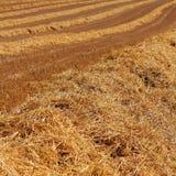 Guld- plöjde texturer för vetefält royaltyfri foto