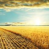 Guld- plockningfält och solnedgång Arkivbild