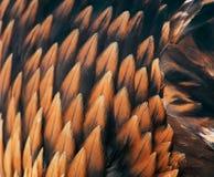 guld- plumage för örn fotografering för bildbyråer