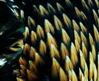 guld- plumage för örn royaltyfri foto
