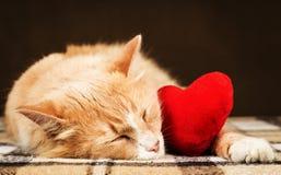 Guld- röd härlig katt som kramar sovande en liten röd flott hjärtaleksak Fotografering för Bildbyråer
