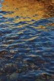 Guld- reflexion Royaltyfri Bild