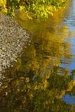 Guld- reflexioner Royaltyfria Bilder