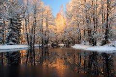 guld- reflexionssolljus Royaltyfria Bilder