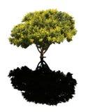 guld- regntree arkivbild