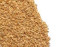 guld- rice Royaltyfria Bilder