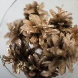 Guld sörjer kottar Royaltyfria Bilder