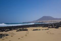 Guld- sandpappra med berget på öar för den Corralejo strandkanariefågeln Spai Arkivbild