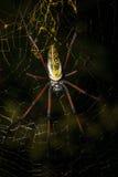 Guld- siden- orb-vävare på netto Madagascar djurliv arkivfoto
