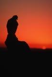 guld- silhouette för örn Royaltyfria Foton