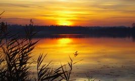 Guld- sjö I royaltyfri fotografi