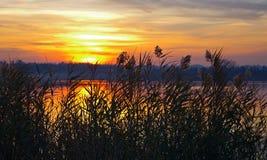 Guld- sjö II royaltyfria bilder