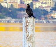 Guld- sjö med kormoran arkivbild