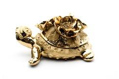 Guld- sköldpadda för porslin, på vit bakgrund Arkivfoton