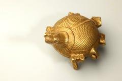 Guld- sköldpaddor Royaltyfria Bilder