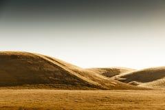 Guld- skördkulle Arkivfoto