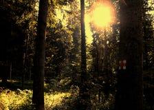 guld- skog Fotografering för Bildbyråer