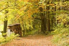 guld- skog Royaltyfri Foto