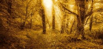 Guld- skog på soluppgång arkivfoto