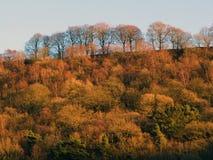 Guld- skogträd för höst som täcker en brant kulle med den högväxta bokträdet arkivfoto