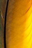 Guld- skriva fjäderbakgrund royaltyfri fotografi