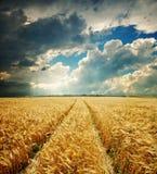 guld- sky för dramatiskt fält Royaltyfri Fotografi