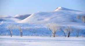 Guld- snowfields Fotografering för Bildbyråer