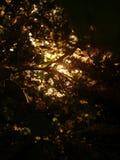 guld- solljus Royaltyfria Bilder