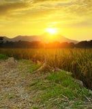 Guld- solnedgång över lantgårdfält Arkivfoto