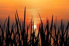 guld- solnedgång Fotografering för Bildbyråer