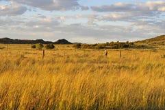 Guld- solnedgång i afrikansk savannah Fotografering för Bildbyråer