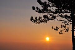 Guld- solnedgång med bergsikt och träd royaltyfria foton