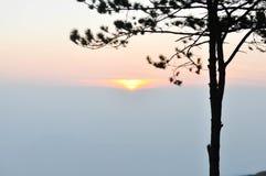 Guld- solnedgång med bergsikt och träd royaltyfria bilder