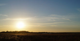 Guld- solnedgång med fältet av örtlandskapsikten Arkivbilder