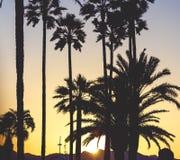 Guld- solnedgång med solsignalljuset bland palmträden för Croisette ` s in Arkivbild