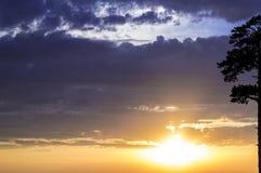 Guld- solnedgång och träd på rätten Arkivbild